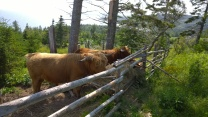 More Coos!