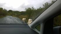 Where do ewe want to go so baad?